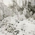 Dans la forêt de Rambouillet